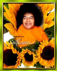 sunflowers-sri-sathya-sai-baba-RPJPSL-THANKS-saiflowers-saifollowers