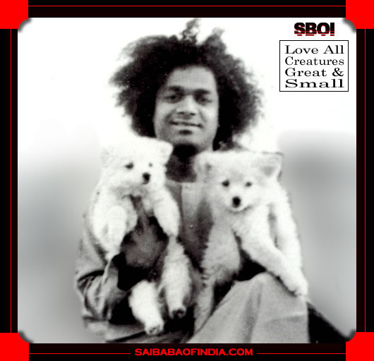 SATHYA SAI BABA WITH TWO DOG PUPPIES - LOVE ALL CREATURES GREAT AND SMALL
