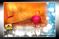 ROSE-ON-LOTUS-FEET-OF-BHAGAWAN-SRI-SATHYA-SAI-BABA
