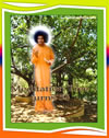 Meditation-Tree-puttaparthi-sari-sathya-sai-baba