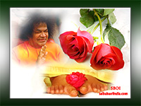 sri-sathya-sai-baba-rose-on-lotus-feet-offering-of-flowers