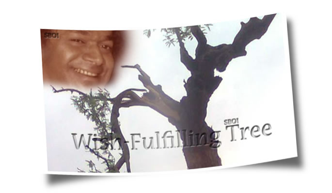 WISH-FULFILLING TREE IN PUTTAPARTHI