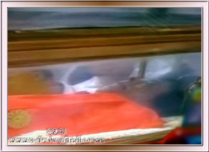 Sacred Photo: Holy & Divine body of Sri Sathya Sai Baba lie in State at Sai Kulwant Hall